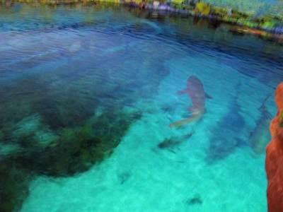 Sea World Shark Encounter