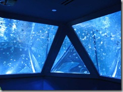 Sea-Life Aquarium Shoaling Ring