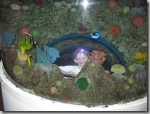 Sea-Life Aquarium Kid Dome in Tank