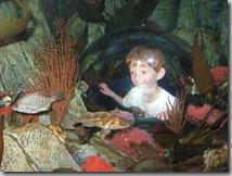 Sea-Life Aquarium Kid Dome in Tank