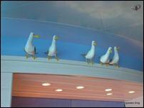 Seagulls at Cabanas